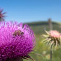 Castelluccio Di Norcia - escursione fotografica (3)