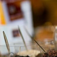 433-fratticioli-foto-cioccola-to-degusstazioni27
